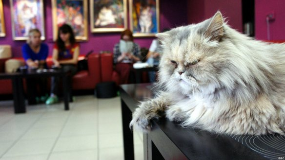 республика кошек музей петербург