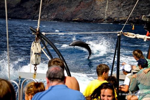 тенерифе, дельфины, киты